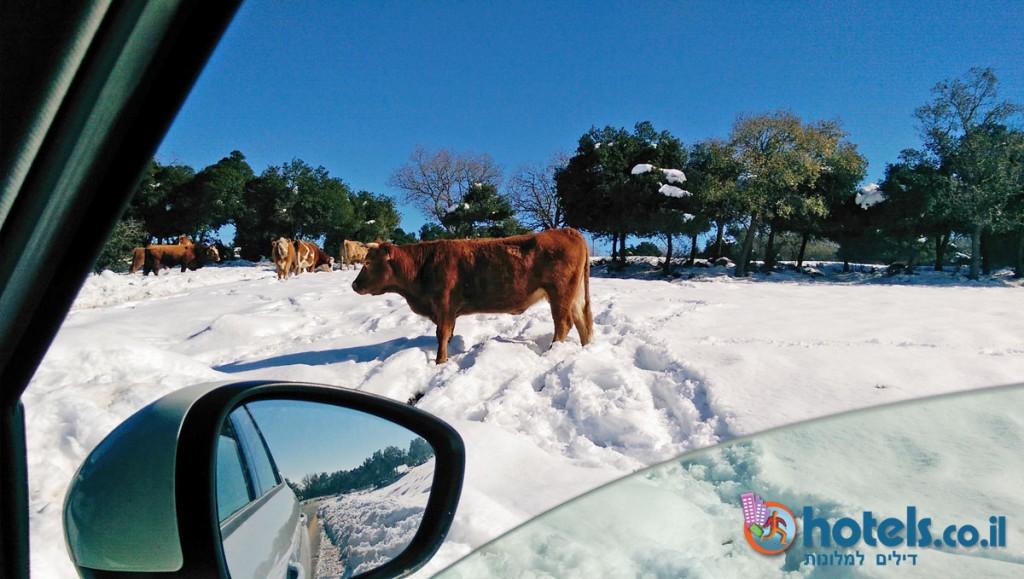 השלג בגולן